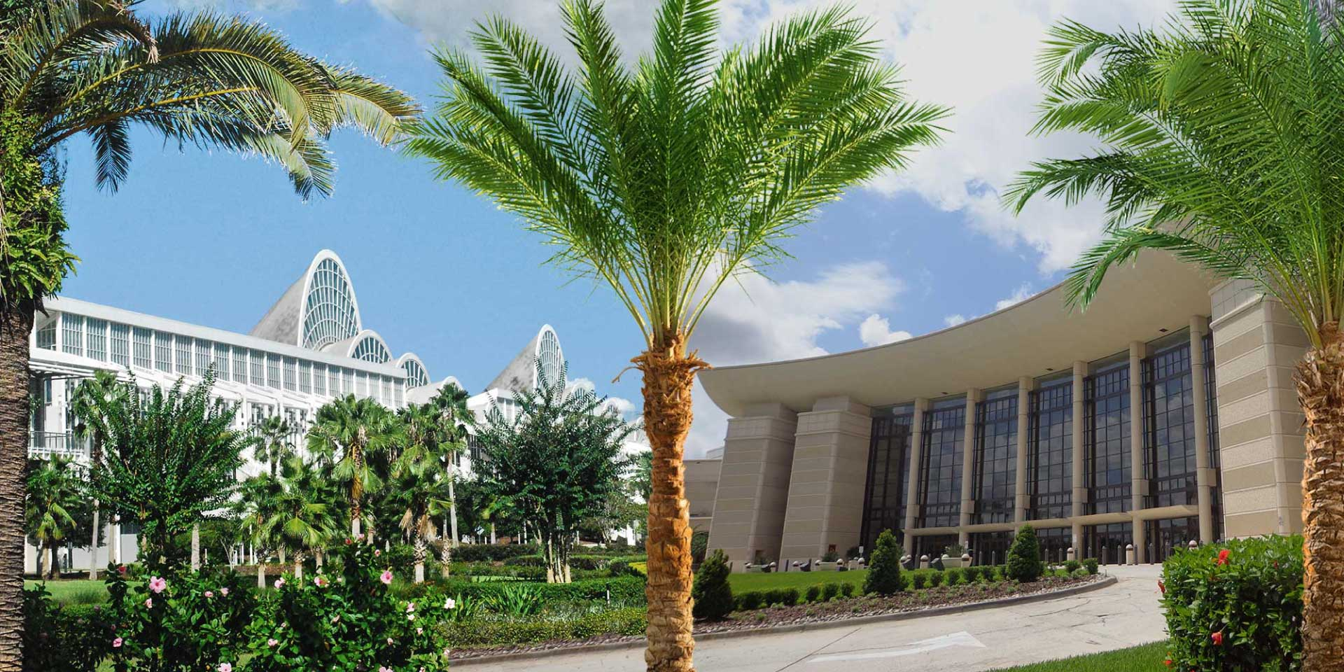 Palm tree with Orange County Convention Center in background